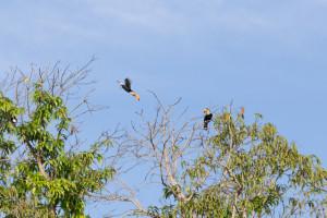 Tucanos, Araras, Corujas e outras aves são presença constante na viagem.